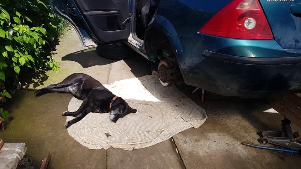 Dzsodzso kutya segít